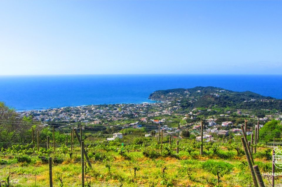 Book your excursion in Ischia with tasting of local products