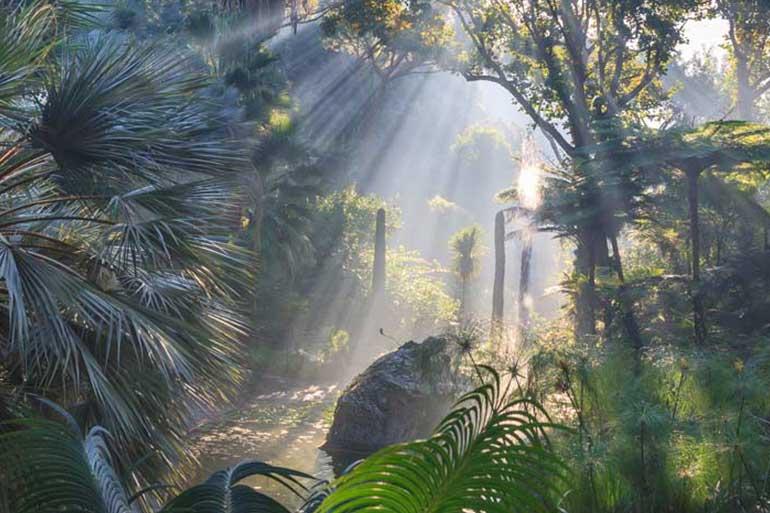 Visit La Mortella Gardens by taxi. Enjoy the nature of Ischia